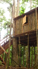 bamboo treehouse accommodation